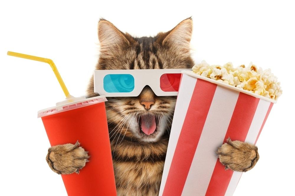 cat in the cinema