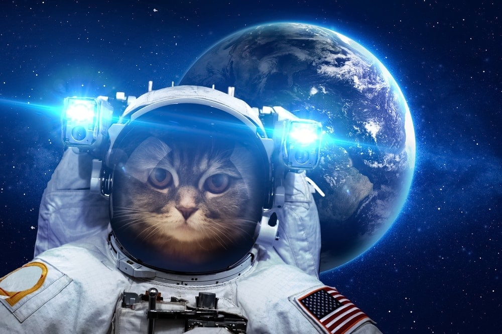 cat in the space
