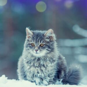 Will My Cat Get Too Cold in the Winter Outside?