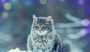 cat in the winter