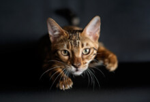What Are Cat Zoomies & Should You Worry?