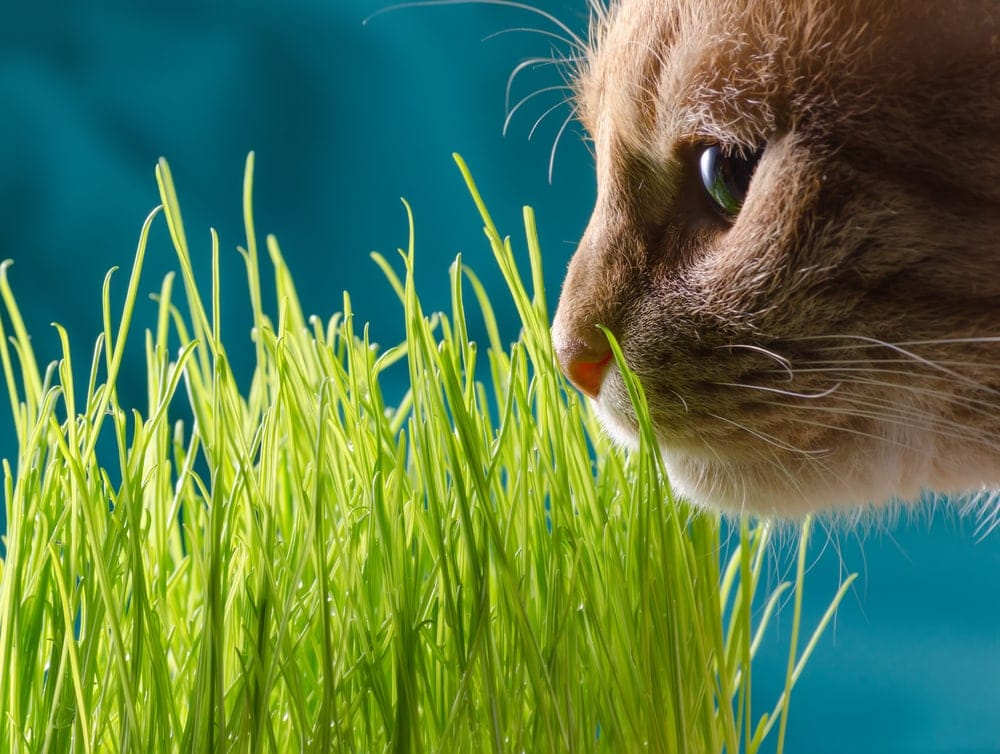 cat is smelling grass