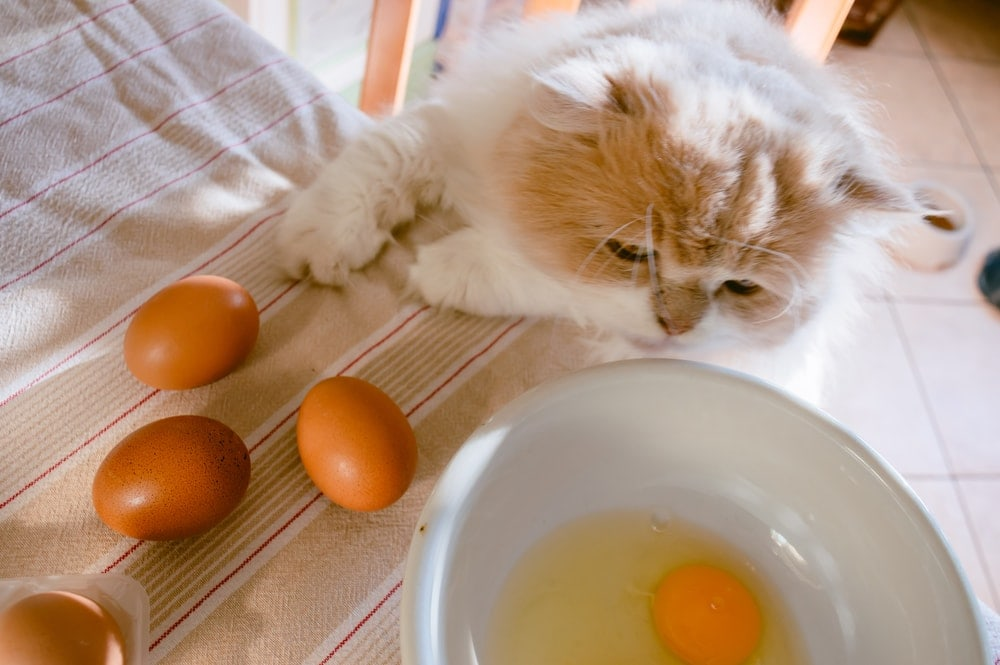 cat is stealing eggs from table