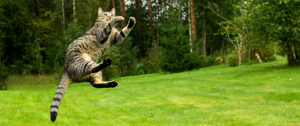 cat jump and kick 1 e1584773151562