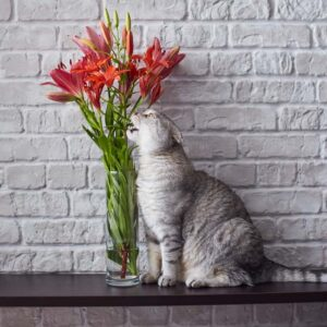 Why Are Lilies Dangerous to Cats?