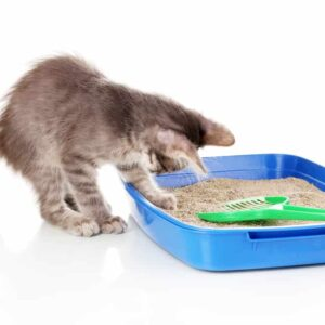 The Best Place for Your Cat's Litter Box