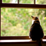7 Ways to Stop Your Cat from Falling out of a Window