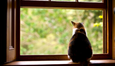 cat look out