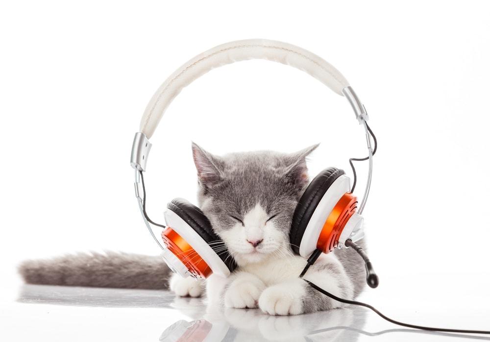 cat music headphones
