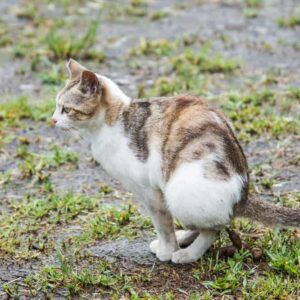 Blood in Cat Poop - Treatments & Causes