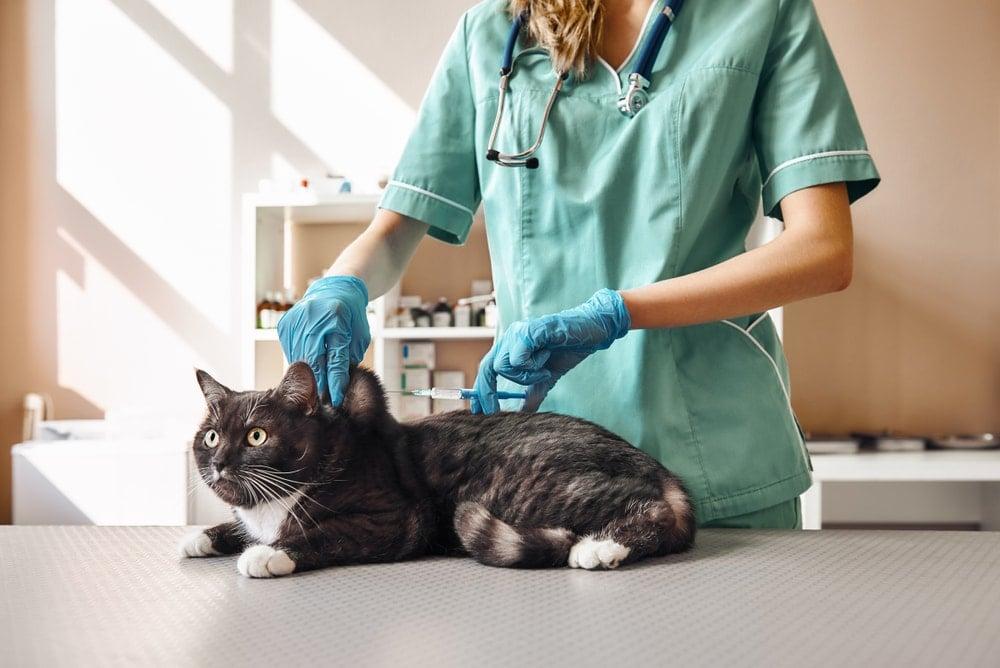 cat sick 2
