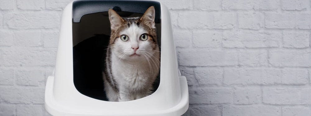 cat sitting in a litter box e1583753948586