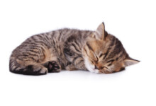 How to Train a Kitten to Sleep at Night?