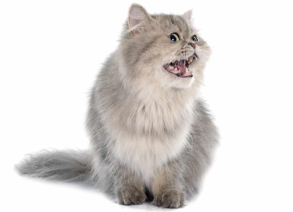 cat sound 1 e1583755700128