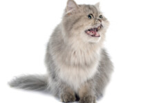 7 Weird Cat Sounds & What They Mean
