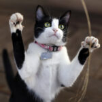 Reasons Why Your Cat Is Standing Up On Its Legs