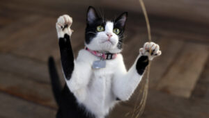 cat stands on legs