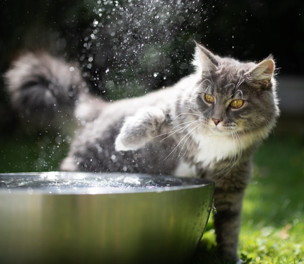 cat touch water
