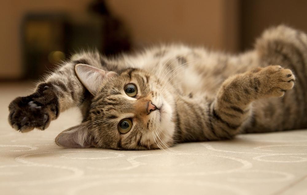 cat zoomies