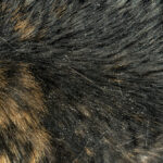 Cat Dandruff - How to Get Rid of It
