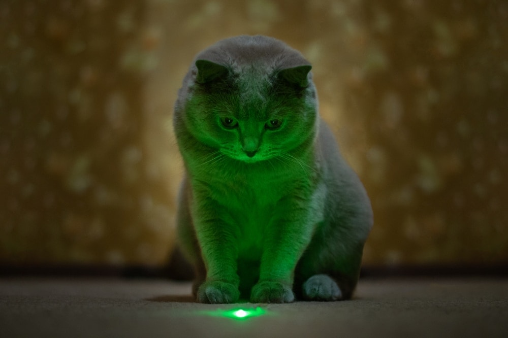 cats green laser pointer