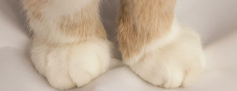 cats paws e1583401241892