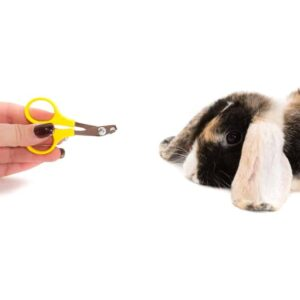 How to Trim Your Rabbit's Nails