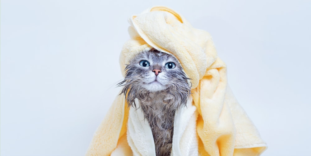 cute cat after shower