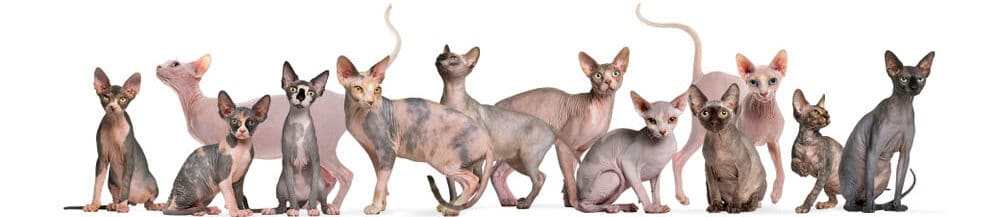 different hairless cats e1584284496298