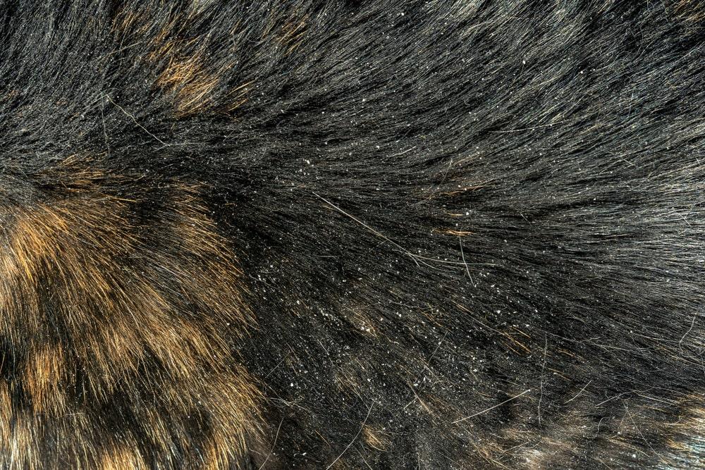 dry cats skin
