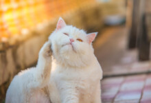 Cat Dry Skin: Treatments & Causes