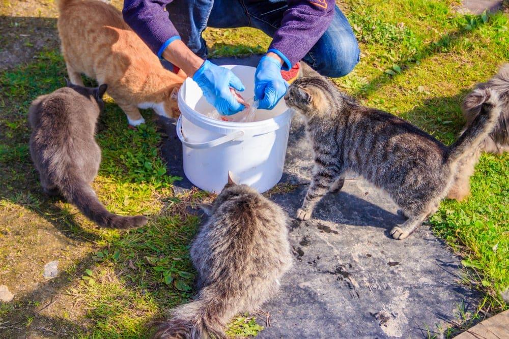 feeding stray cats