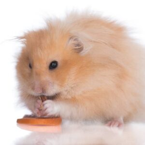 10 Common Mistakes New Hamster Owners Do