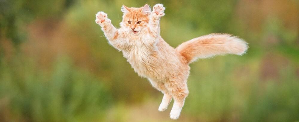 flying red cat e1584268854366