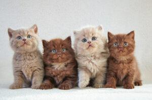 four kittens 1