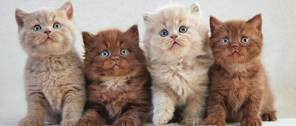 four kittens e1584720695404
