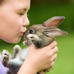 Getting a Pet Rabbit: 8 Things to think about