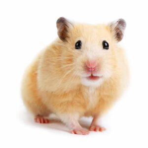 10 Facts About Hamsters