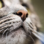 Dry Cat Nose - Causes & Treatment