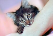 How to Stop Kitten Biting