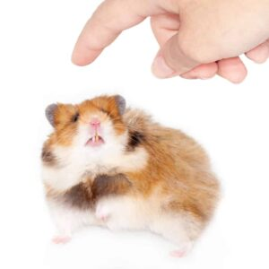Why Do Hamsters Bite & How to Stop it?