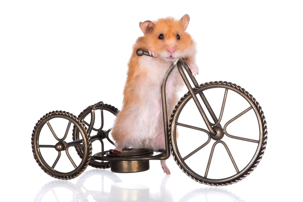 hamster bicycle