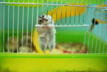 Why Do Hamsters Chew Cage Bars?