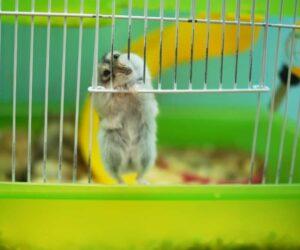 hamster chew bars