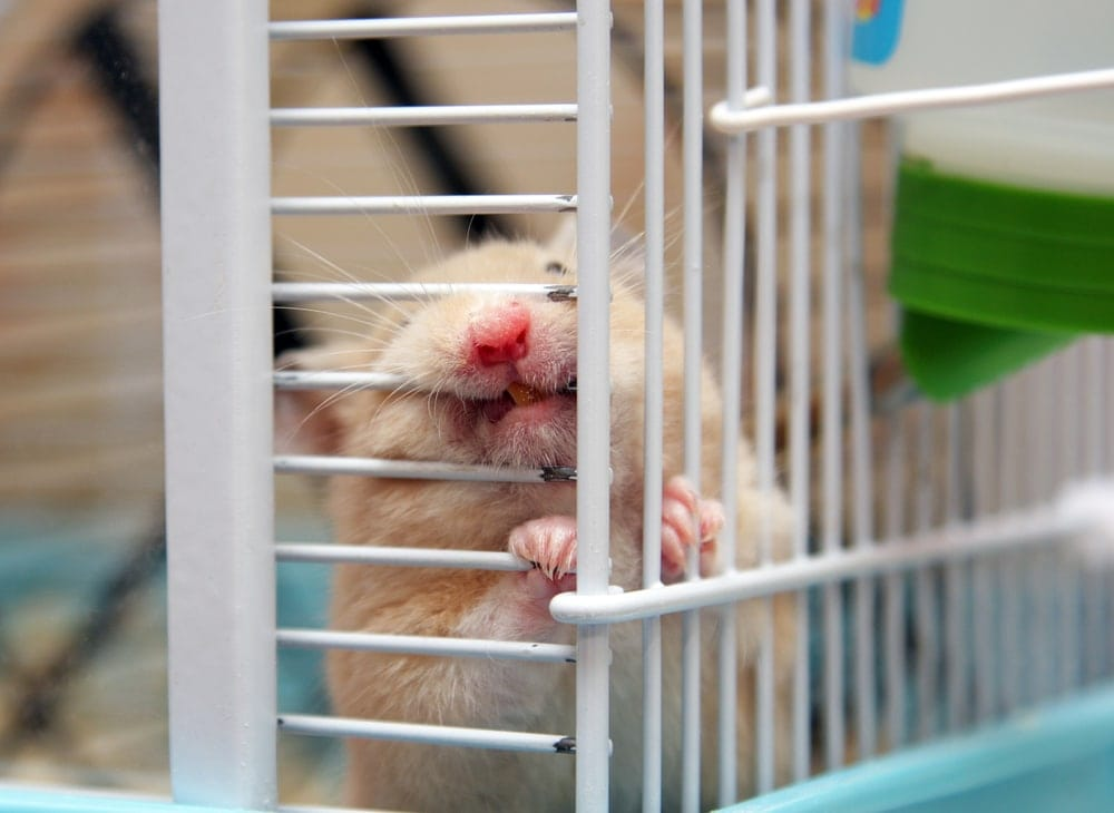 hamster chew cage