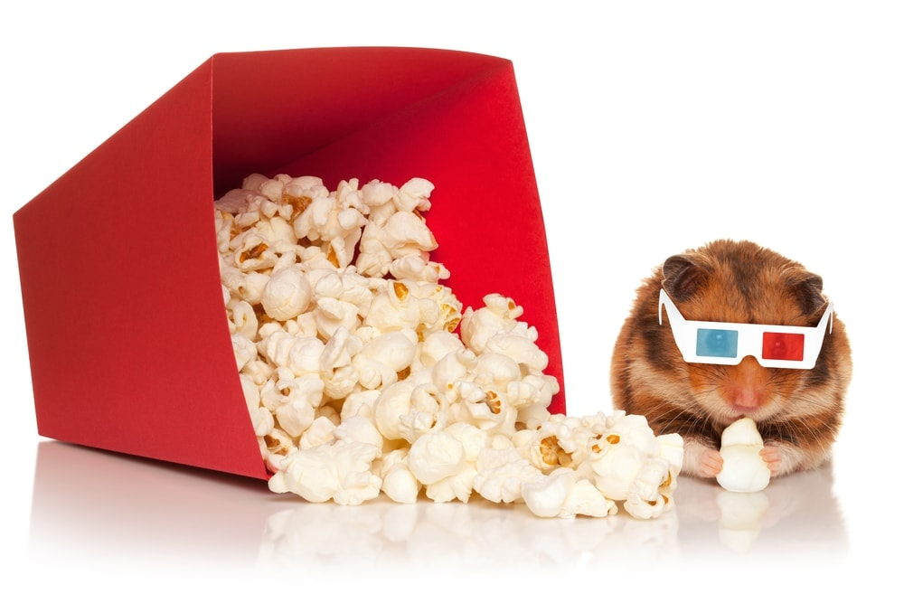 hamster popocorn cinema