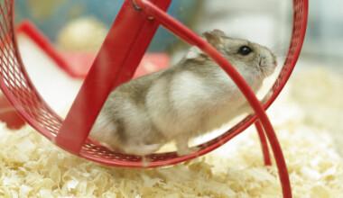 hamster wheel 1