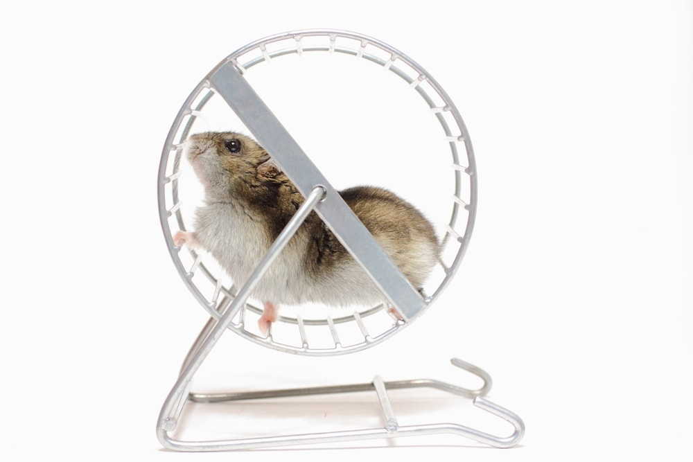 hamster wheel white bg