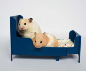 hamsters in bed