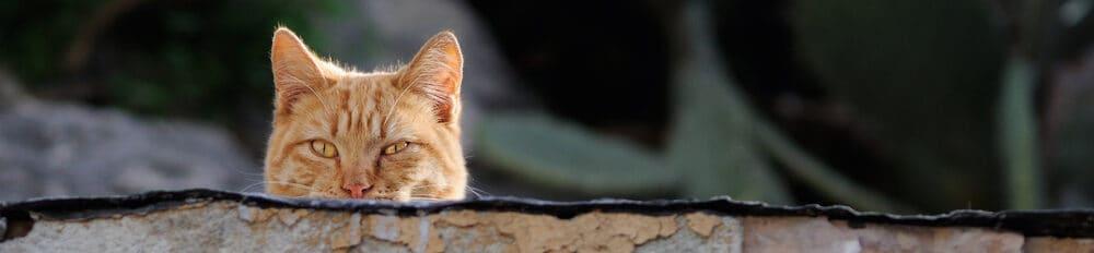 hunting cat e1584285498946